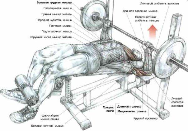 Упражнения для грудных мышц фото 635-619