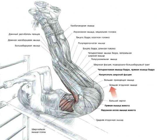 Подъемы ног на наклонной скамье.jpg