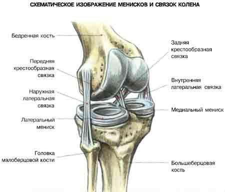колено.jpg