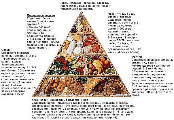 пищевая пирамида.jpg