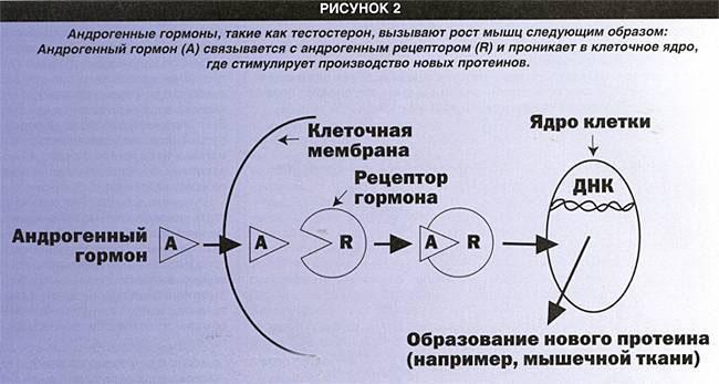 рис 2.jpg
