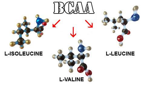 bcaa аминокислоты.jpg