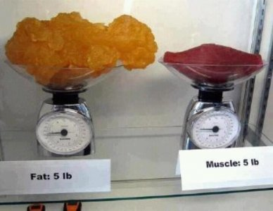 как перегнать жир из живота в грудь